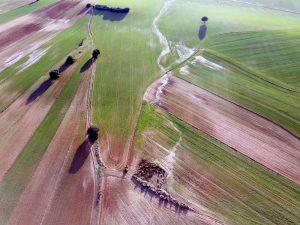 Prospección con RPA para peritaje de daños en agricultura tras del paso de la Borrasca Filomena. Madrid © Aerial Técnica 2021.
