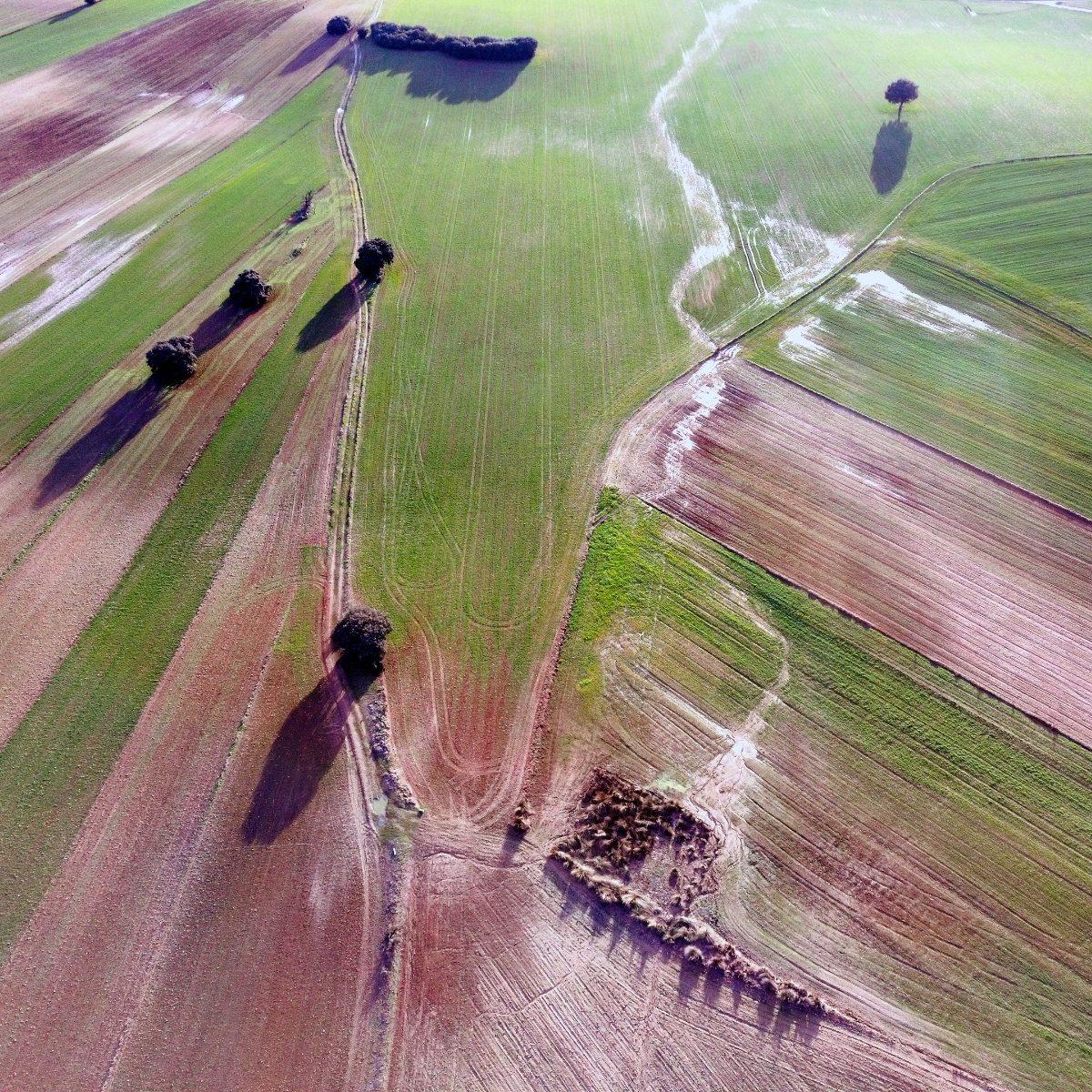 Prospección con RPA para peritaje de daños en agricultura. Después del paso de Filomena. Madrid © Aerial Técnica 2021.