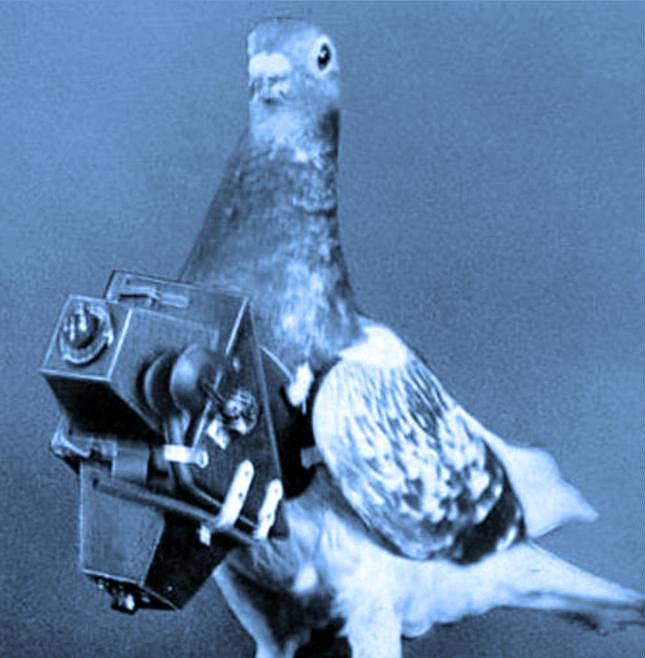 Paloma equipada con la primera cámara aérea inventada por Julius Neubronner, y utilizada en la Primera Guerra Mundial.